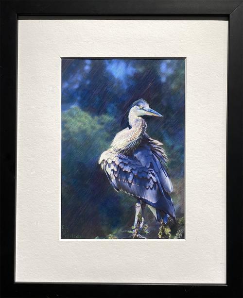 Debi Lyn Friedlander, Heron: Fluffed, Colored Pencil PhotoFusion, $175