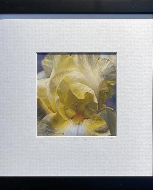 Debi Lyn Friedlander, Yellow, Colored Pencil PhotoFusion, $95