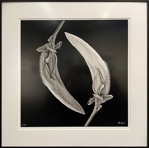 Phil Coleman, A Conversation, Photography, $295